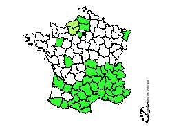 Le thym bio en France